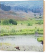 Bison In The Meadow Wood Print