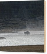 Bison In The River Wood Print