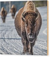 Bison In The Road - Yellowstone Wood Print