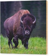Bison Of Yellowstone Wood Print