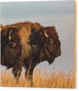 Bison Pair Wood Print