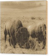 Bison Pair Wood Print