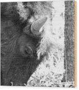 Bison Portrait Monochrome Wood Print