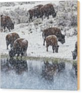 Bison Snow Reflecton Wood Print