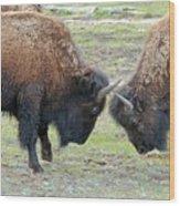 Bison Standoff Wood Print