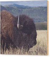 Bison Strength Wood Print