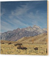 Bison The National Mammal Wood Print
