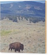 Bison Trail Wood Print