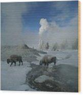Bison Walking In Front Of Lion Geyser Wood Print