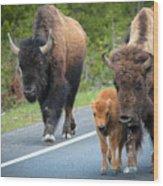 Bison Walking Wood Print