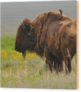 Bison With Cowbird On Back Wood Print