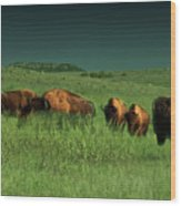 Bisons In The Prarie Wood Print