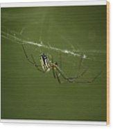 Bitsy Spider Wood Print