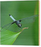 Black And Blue Dragonfly Wood Print