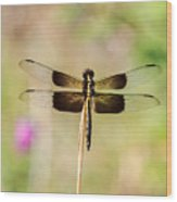 Black And Gold Dragonfly Wood Print