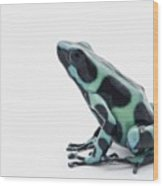 Black And Green Poison Dart Frog Wood Print