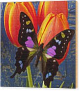 Black And Pink Butterfly Wood Print