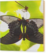 Black And Red Butterflies Wood Print
