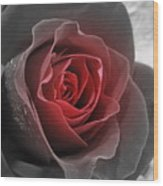 Black And Red Rose Wood Print