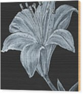 Black And White Asiatic Lily Wood Print