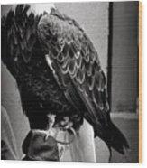 Black And White Bald Eagle Wood Print