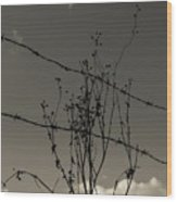 Black And White Barbwire And Branch Wood Print