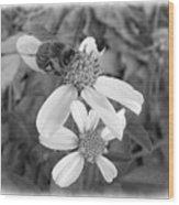 Black And White Bee Wood Print