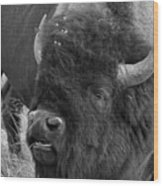 Black And White Bison In Heat Wood Print
