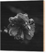 Black And White Bloom Wood Print