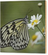 Black And White Butterfly On A Daisy Wood Print