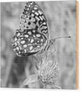 Black And White Butterfly On Clover Wood Print