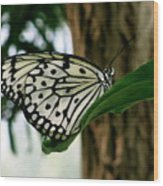 Black And White Butterfly Wood Print