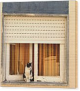 Black And White Cat On The Windowsill Wood Print
