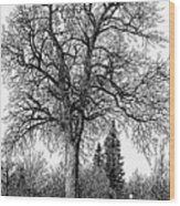 Black And White Christmas Wood Print