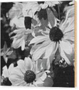 Black And White Coneflowers Wood Print