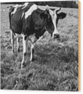 Black And White Cow Wood Print