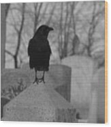 Black And White Crow On Gray Stone Wood Print