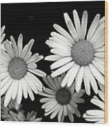 Black And White Daisy 2 Wood Print