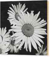 Black And White Daisy 3 Wood Print