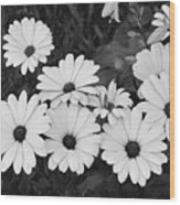 Black And White Daisy Garden Wood Print