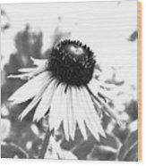 Black And White Daisy Wood Print