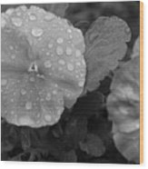 Black And White Dewy Pansy 1 Wood Print