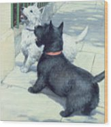Black And White Dogs Wood Print by Septimus Edwin Scott