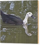 Black And White Duck Reflections Wood Print