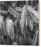 Black And White Ear Of Corn On The Stalk Wood Print