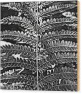 Black And White Fern Wood Print