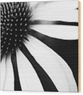 Black And White Flower Maco Wood Print