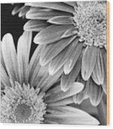 Black And White Gerber Daisies 3 Wood Print