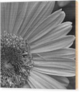 Black And White Gerber Daisy 5 Wood Print