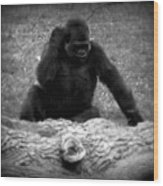 Black And White Gorilla Wood Print